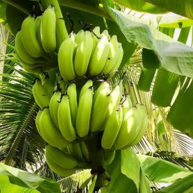Мука из зеленых бананов